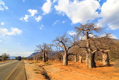 Baobab powder fruit 239015296